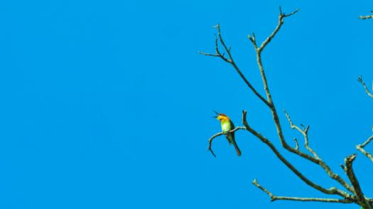 Bird chirping against blue sky